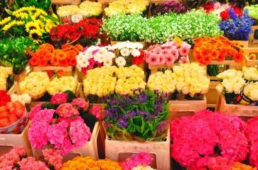Цветочный отдел с минимальной конкуренцией