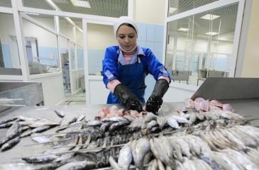 Производство рыбной продукции, прибыль 500 тр/мес