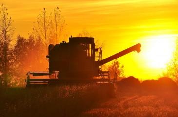 Сельхозпредприятие в Алтайском крае