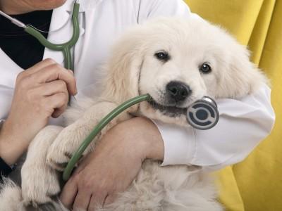 Ветеринарная клиника в Ленинском р-не
