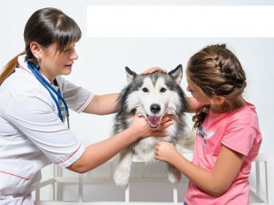 Ветеринарная клиника в собственности