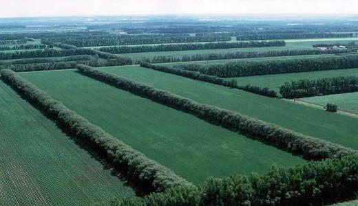 Земли сельхозназначения в Алтайском крае