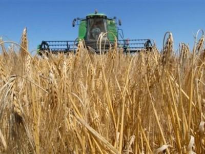Крестьянско-фермерское хозяйство