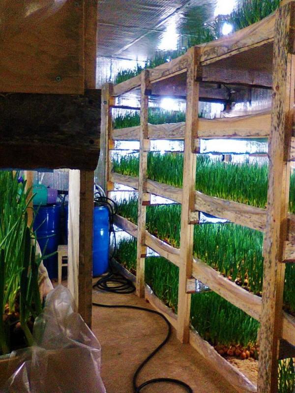 Бизнес по выращиванию в гараже 20