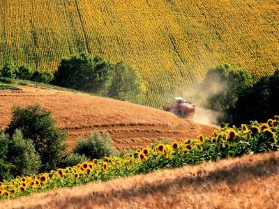 Фермерское хозяйство в 100 километрах от Барнаула