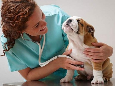 Ветеринарная клиника (продано)