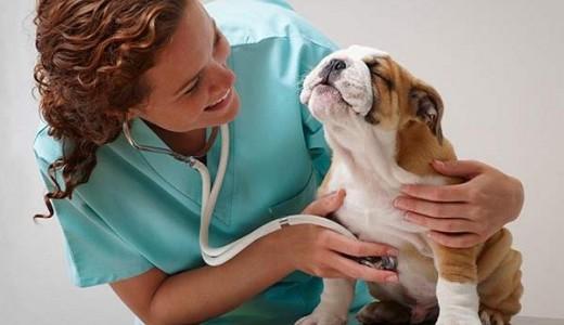 Ветеринарная клиника.