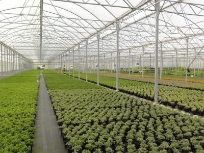 Тепличное овощеводческое хозяйство