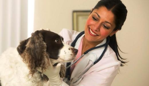 Ветеринарная клиника в Индустриальном районе (продано)